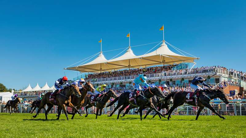 Image result for goodwood races