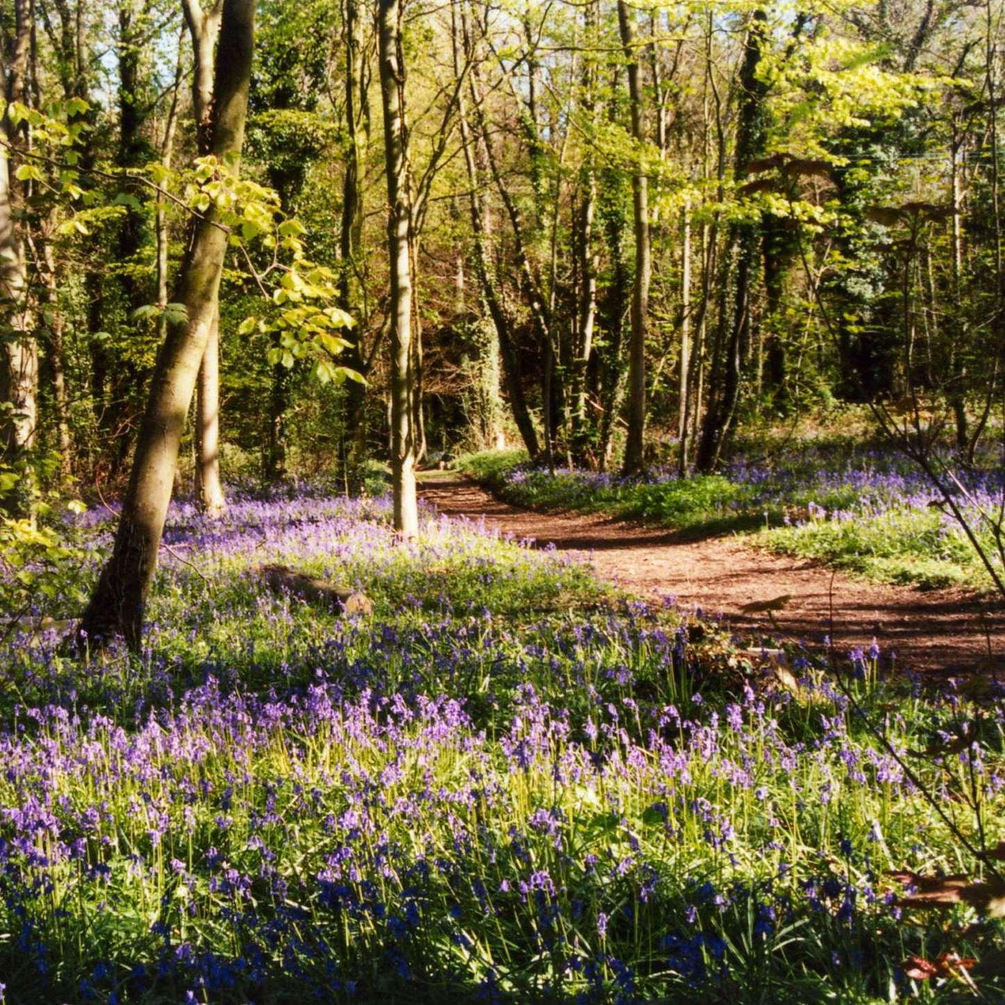 Seeley Copse Nature Trails